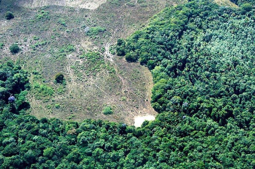 amazônia agronegócio